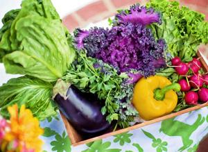 koreni-na-zeleninu.jpg