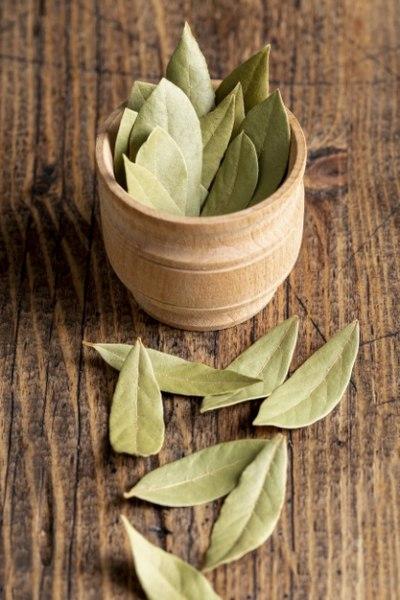 Celý a sušený bobkový list